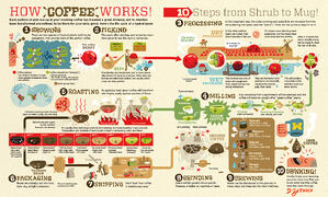 from-bean-to-brew-the-coffee-supply-chain